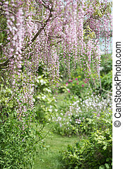 Wisteria hanging in the foreground of a beautiful garden.