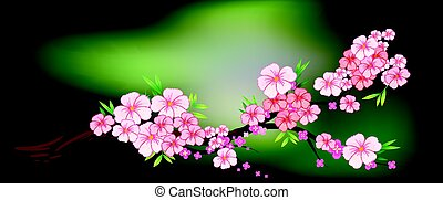 Cherry blossom on the branch