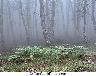 Analog foggy woods