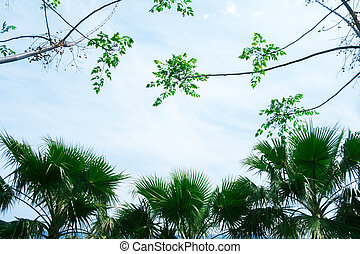 Palm tree silhouettes on blue sky background