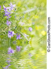 Bellflower on the meadow - Blue bellflower on the sunny...