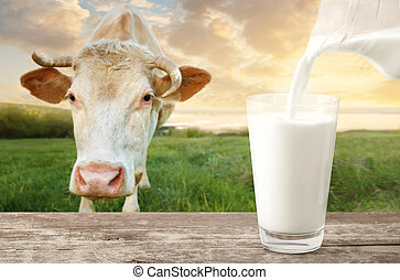 pouring milk with cow