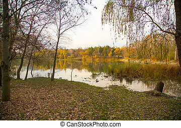Park lake in fall