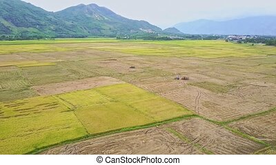 Aerial Panorama of Rural Landscape with Rice Fields - aerial...