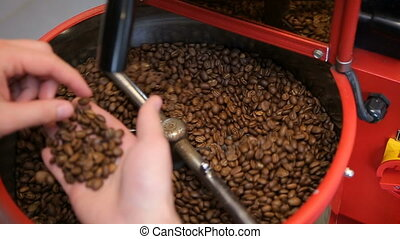 Barista inspects and roasts coffee beans. Person checks the quality of freshly roasted coffee beans
