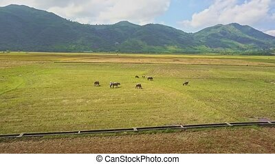 Drone Flies above Water Canal and Buffaloes on Field - drone...
