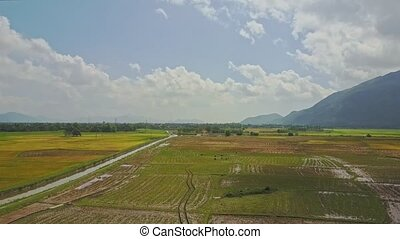 Drone Flies over Large Green Rice Field against Blue Sky -...