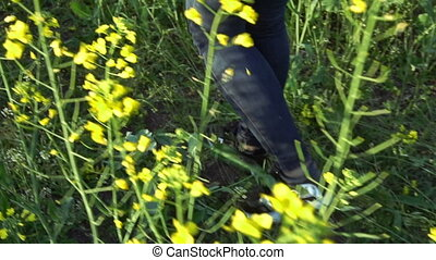 The girl is walking on the rapeseed field