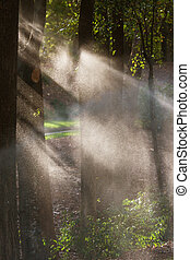 Sunlight Backlights Water From Sprinkers To Form Perfect...