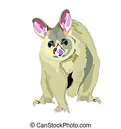 Australian Realistic Possum Vector Illustration - Realistic...
