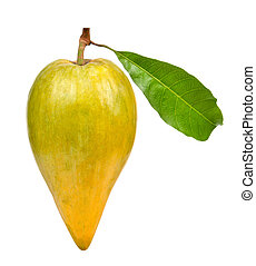 Pouteria campechiana isolated on the white background.