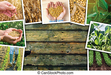Soybean farming in agriculture photo collage