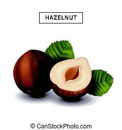 isolated hazelnut elements - hazelnut elements for design...