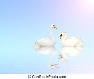 藍色, 水, 天鵝, 二, 啞巴