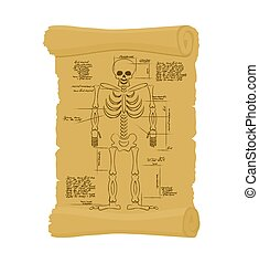 Ancient scroll of skeleton. Archaic papyrus of anatomical...