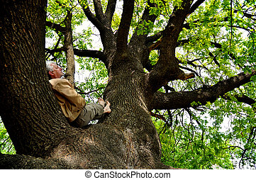 Rest on a tree - The elderly man is lying has a rest on a...