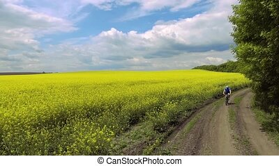 A male cyclist is riding on a picturesque yellow rapeseed...
