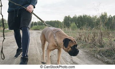 Closeup dolly shot of young sporty man walking with his bullmastiff dog outdoor at nature after workout training
