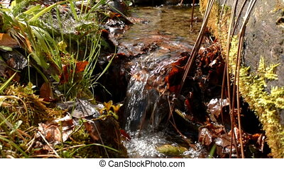 Small water stream - A small stream. Small water stream...