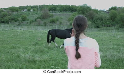 A young woman takes off on a smartphone a horse tied to a grazing in the field. Beautiful girl in the countryside shoots a horse.