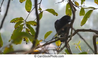 Black crow sits on a tree branch in the park. Slow motion...