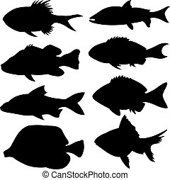 Set of different small fish silhouettes isolated on white