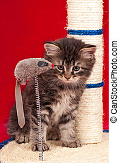 Curious little kitten - Curious kitten on the scratching...
