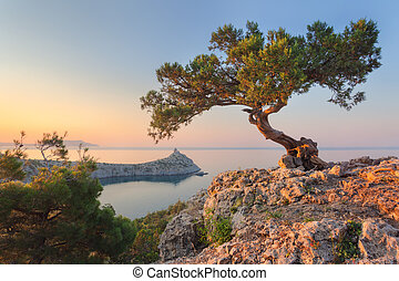Amazing tree growing out of the rock at sunrise. Colorful...