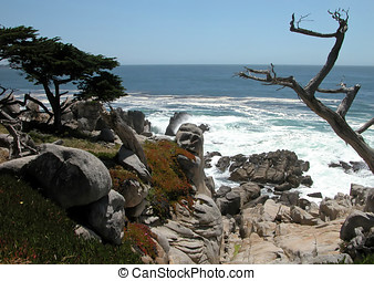 Life And Death Of Monterey Cypress - A juxtaposition of a...