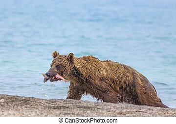 Bear caught a salmon