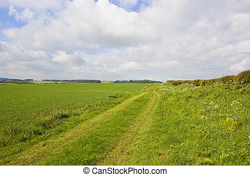 minster way bridleway - scenic part of the minster way...