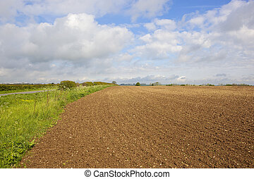 cultivated soil and hedgerow - chalky cultivated fields with...