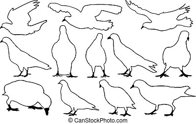 Set of different pigeons