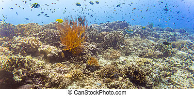 Coral reef and fish in tropical sea underwater - Coral reef...