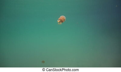 Big jellyfish in the water. Bucas Grande Island, Sohoton...