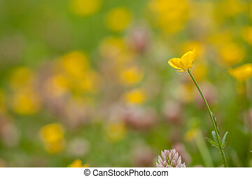 wild field flowers on green grass background