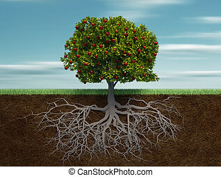 Fruiter - Conceptual tree with apple and root - this is a 3d...