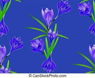 Purple Crocus Flowers - Spring flowers, purple blooming...