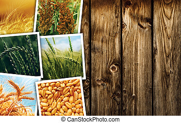 Cereal plant farming in agriculture photo collage,...