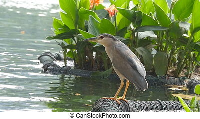 Beautiful bird sits on the lake shore and flies away. Slow...