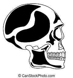 Skull of the person on white background is insulated