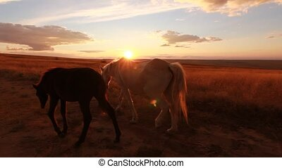 two horses on meadow at colorful sunset