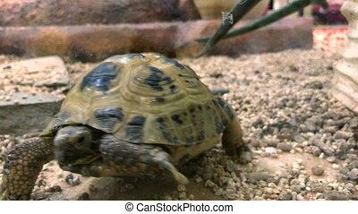Turtle walks on the gorund