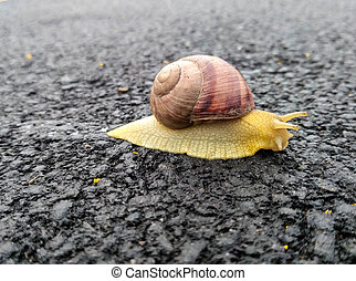the snail on the asphalt in the spring