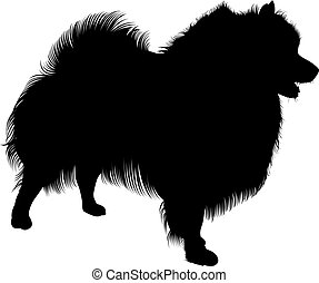 Black silhouette of spitz. Vector. isolated on white...