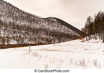 Forest of pine trees and snow covered mountain at Olkhon Island