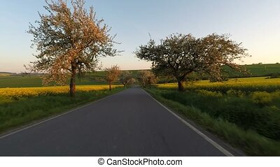 Car driving in spring rural countryside road with tree alley...
