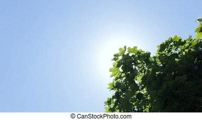 Solar glare through the leaves of trees - The rays of the...