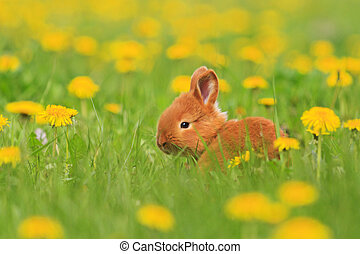 red rabbit among the first spring flowers