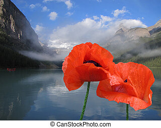 Poppies of Lake Louise. - isolated poppies at Lake Louise.